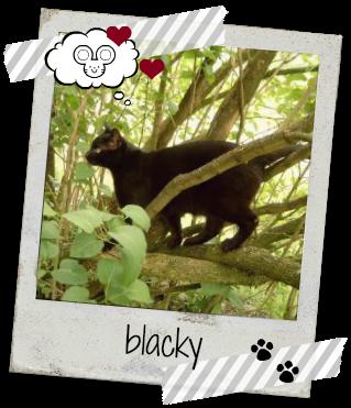 Kater Blacky im Baum