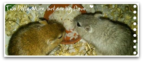 Two little Mice, but one big Love...