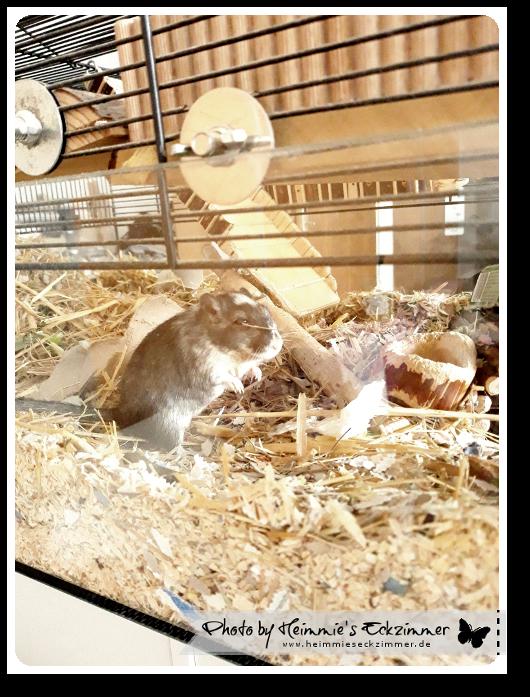 Mäuschen in seinem Käfig