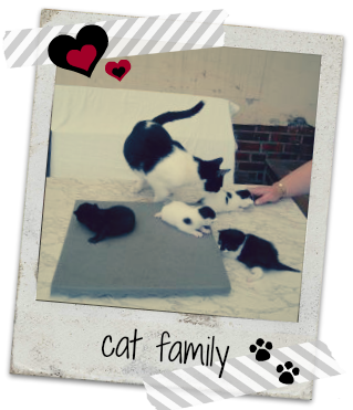 catfamily01